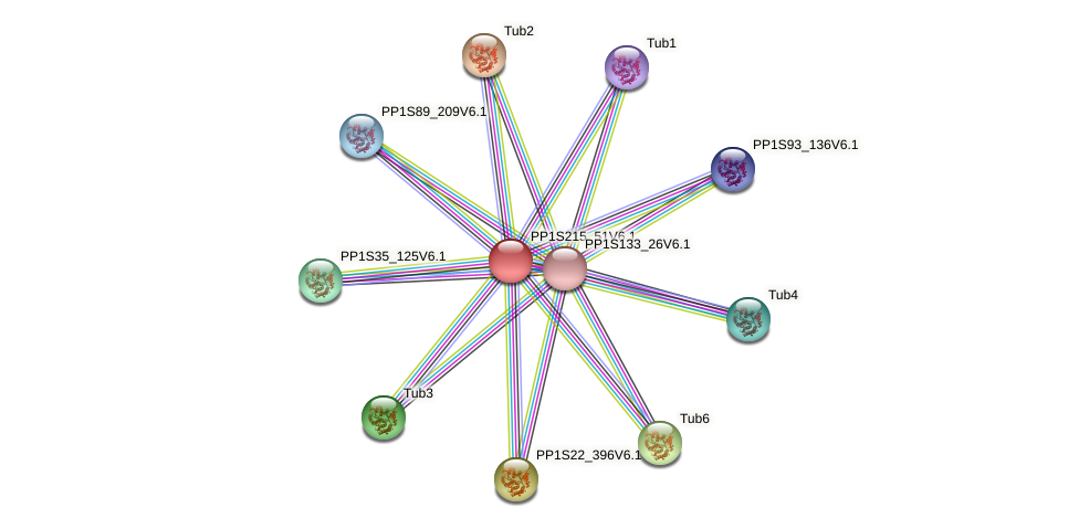 PP1S215_51V6.1 protein (Physcomitrella patens) - STRING interaction network