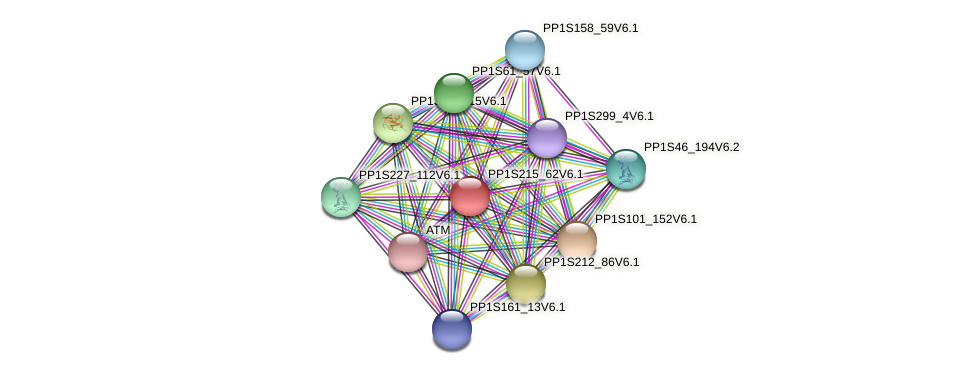 PP1S215_62V6.1 protein (Physcomitrella patens) - STRING interaction network