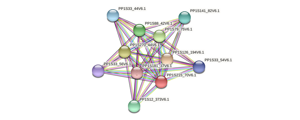 PP1S215_70V6.1 protein (Physcomitrella patens) - STRING interaction network
