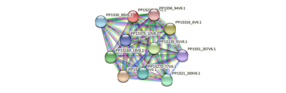 PP1S215_81V6.1 protein (Physcomitrella patens) - STRING interaction network