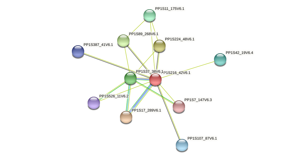 PP1S216_42V6.1 protein (Physcomitrella patens) - STRING interaction network