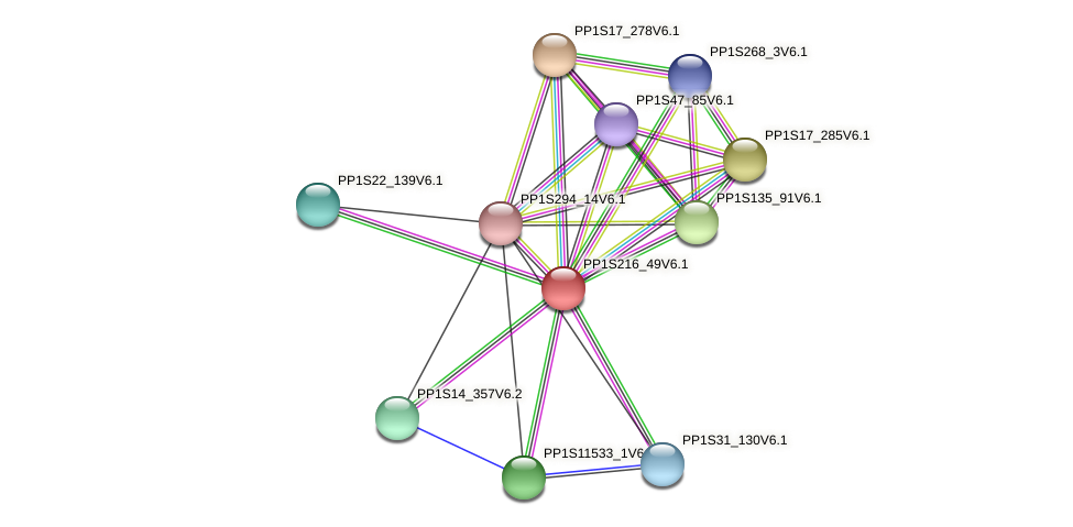 PP1S216_49V6.1 protein (Physcomitrella patens) - STRING interaction network