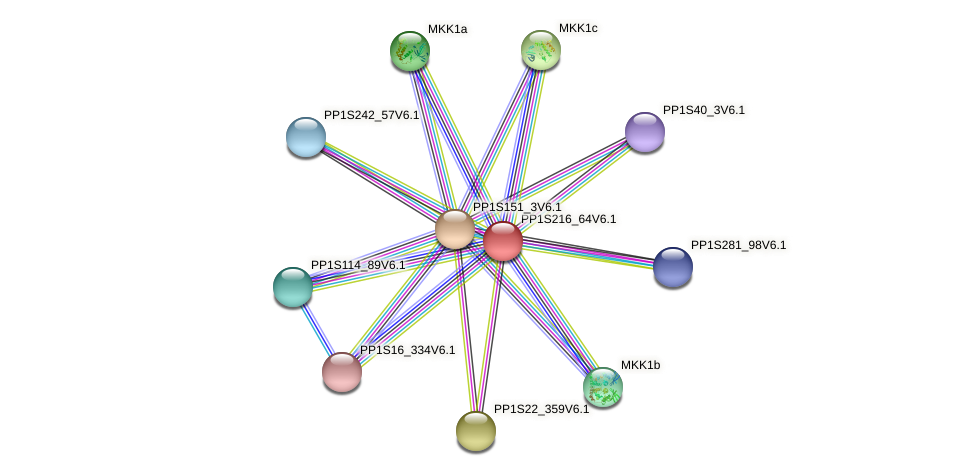 PP1S216_64V6.1 protein (Physcomitrella patens) - STRING interaction network
