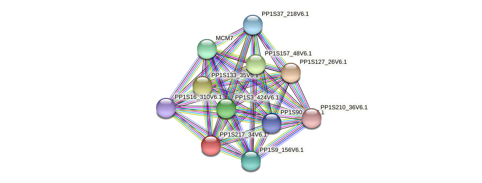 PP1S217_34V6.1 protein (Physcomitrella patens) - STRING interaction network