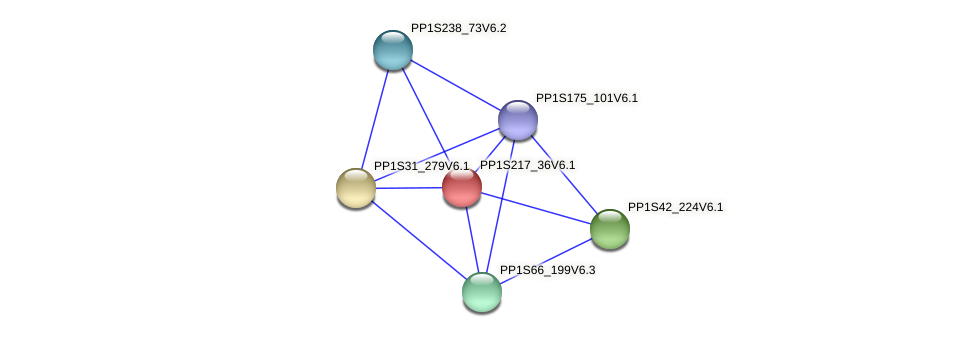 PP1S217_36V6.1 protein (Physcomitrella patens) - STRING interaction network