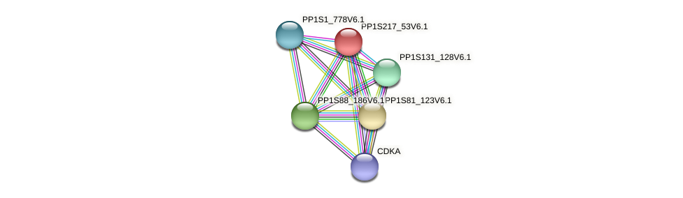 PP1S217_53V6.1 protein (Physcomitrella patens) - STRING interaction network