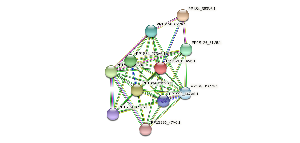 PP1S218_14V6.1 protein (Physcomitrella patens) - STRING interaction network