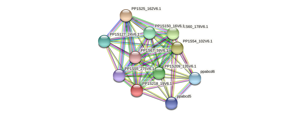 PP1S218_19V6.1 protein (Physcomitrella patens) - STRING interaction network