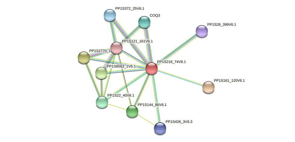 PP1S218_74V6.1 protein (Physcomitrella patens) - STRING interaction network