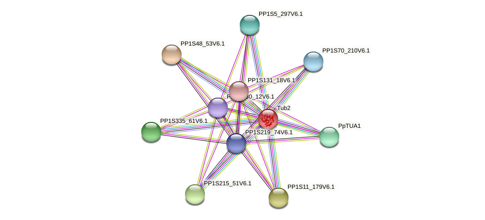 Tub2 protein (Physcomitrella patens) - STRING interaction network