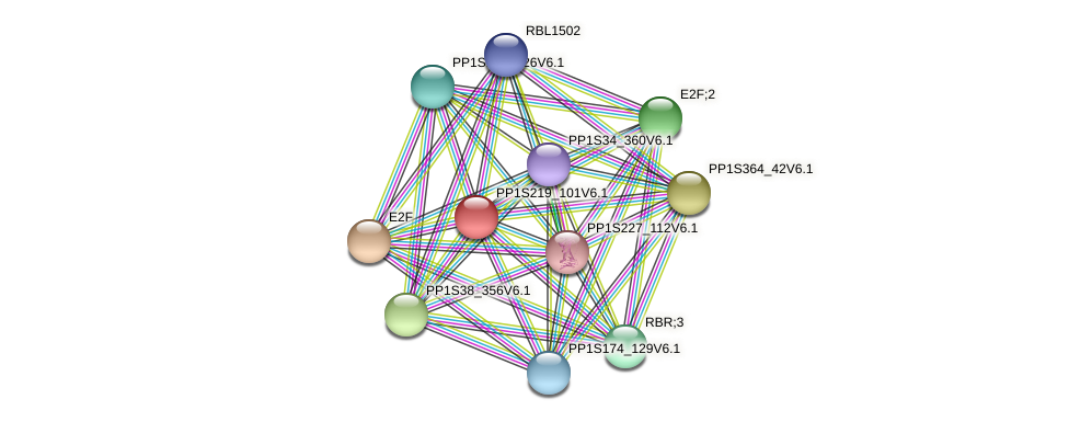PP1S219_101V6.1 protein (Physcomitrella patens) - STRING interaction network