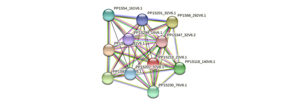 PP1S219_23V6.1 protein (Physcomitrella patens) - STRING interaction network