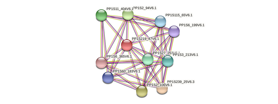 PP1S219_47V6.1 protein (Physcomitrella patens) - STRING interaction network