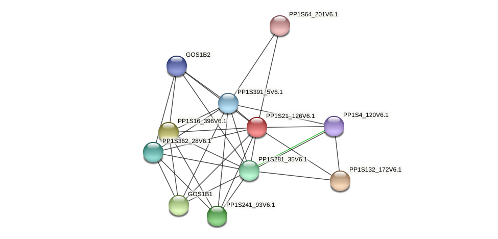 PP1S21_126V6.1 protein (Physcomitrella patens) - STRING interaction network
