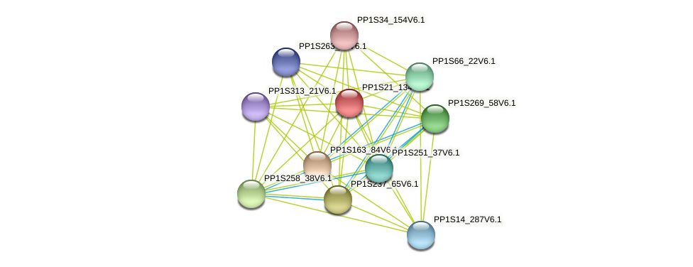 PP1S21_134V6.1 protein (Physcomitrella patens) - STRING interaction network