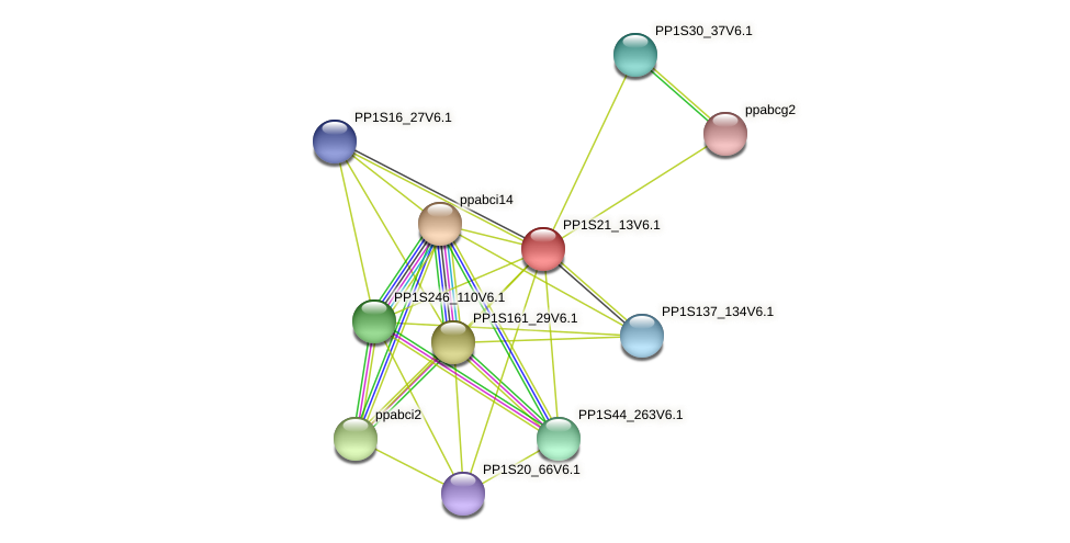 PP1S21_13V6.1 protein (Physcomitrella patens) - STRING interaction network