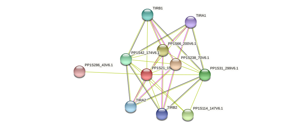 PP1S21_159V6.1 protein (Physcomitrella patens) - STRING interaction network