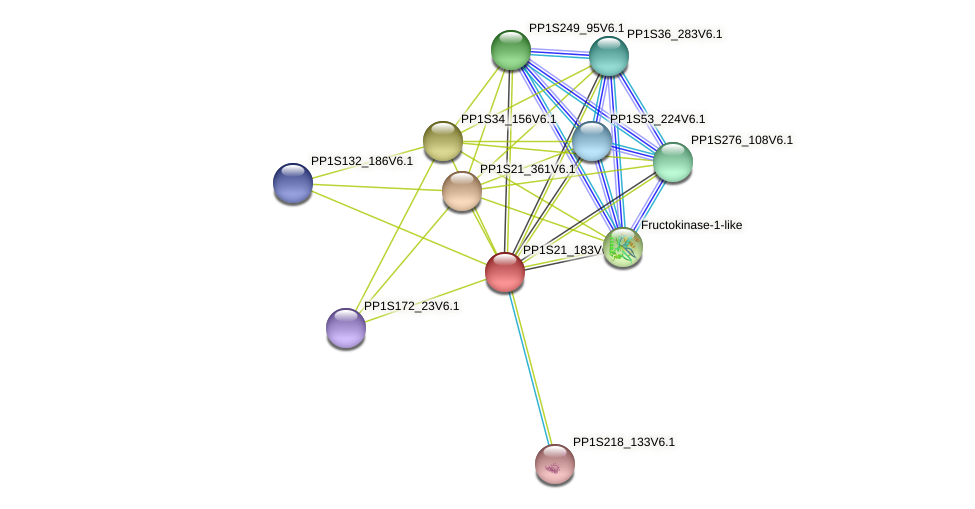 PP1S21_183V6.1 protein (Physcomitrella patens) - STRING interaction network