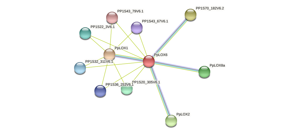 PpLOX6 protein (Physcomitrella patens) - STRING interaction network