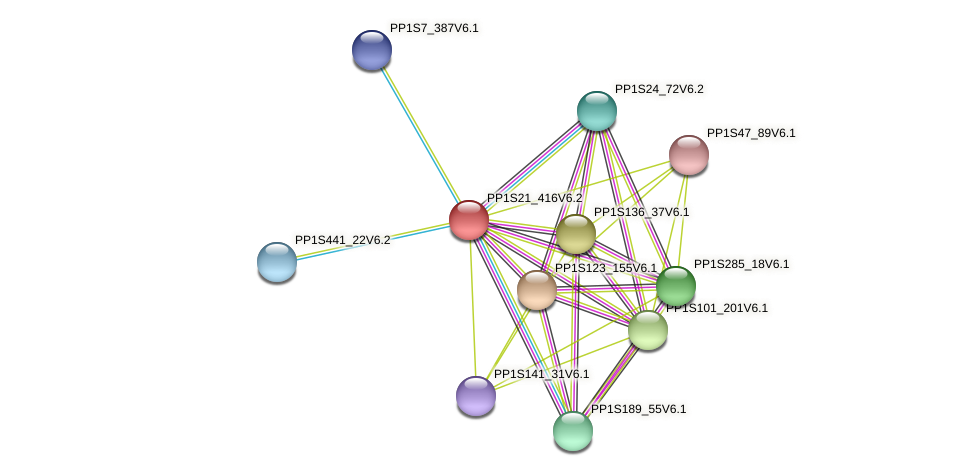 PP1S21_416V6.2 protein (Physcomitrella patens) - STRING interaction network