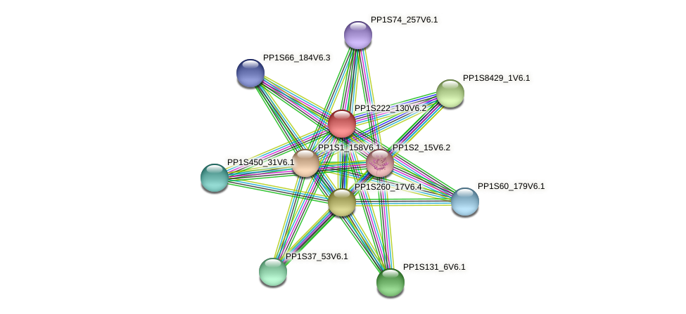 PP1S222_130V6.2 protein (Physcomitrella patens) - STRING interaction network