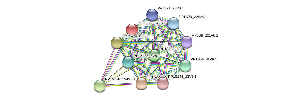 PP1S222_84V6.1 protein (Physcomitrella patens) - STRING interaction network