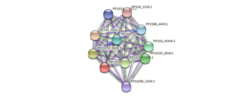 PP1S223_114V6.1 protein (Physcomitrella patens) - STRING interaction network