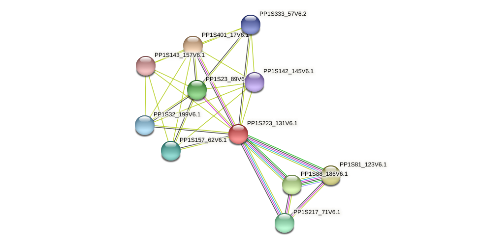 PP1S223_131V6.1 protein (Physcomitrella patens) - STRING interaction network
