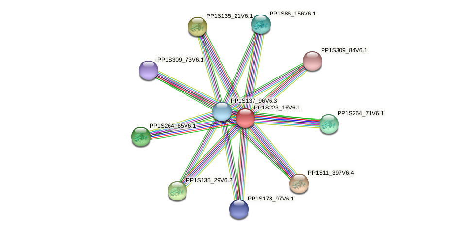 PP1S223_16V6.1 protein (Physcomitrella patens) - STRING interaction network