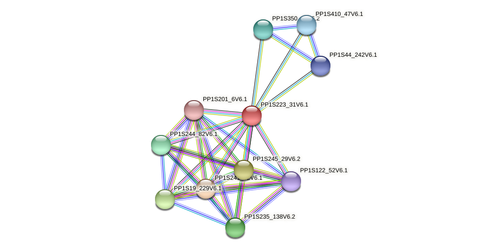 PP1S223_31V6.1 protein (Physcomitrella patens) - STRING interaction network
