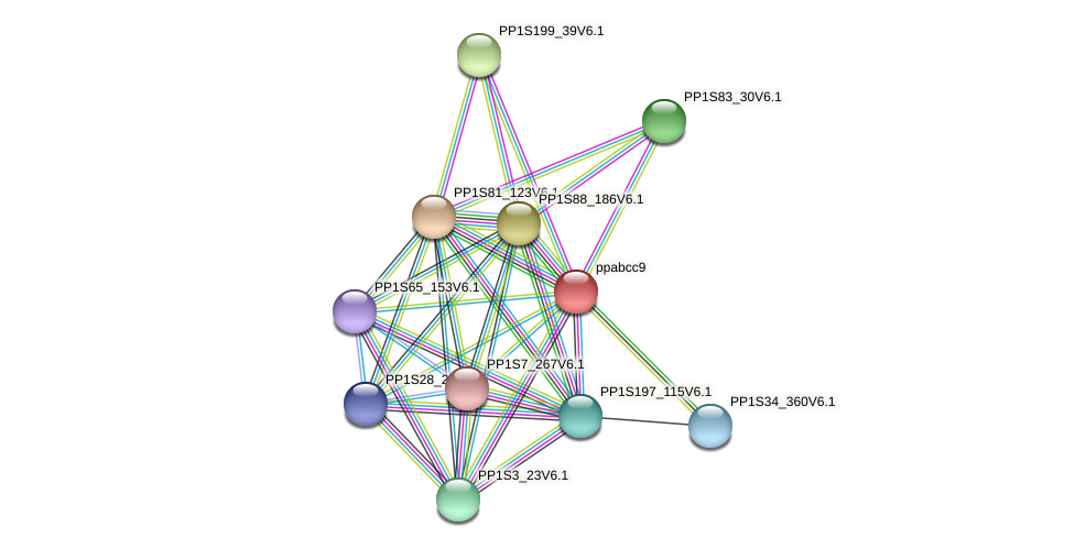 ppabcc9 protein (Physcomitrella patens) - STRING interaction network