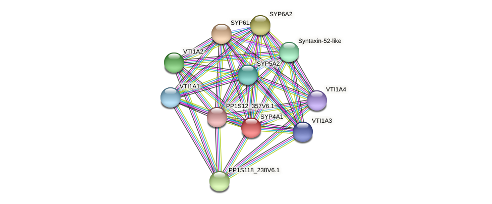 SYP4A1 protein (Physcomitrella patens) - STRING interaction network