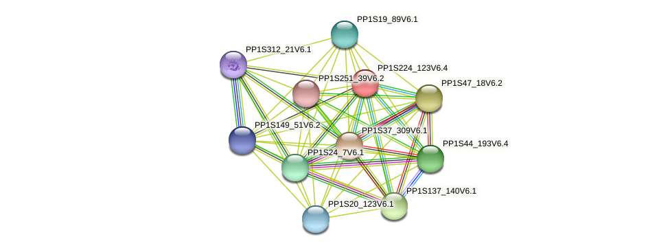PP1S224_123V6.1 protein (Physcomitrella patens) - STRING interaction network