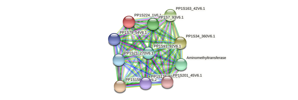 PP1S224_1V6.1 protein (Physcomitrella patens) - STRING interaction network