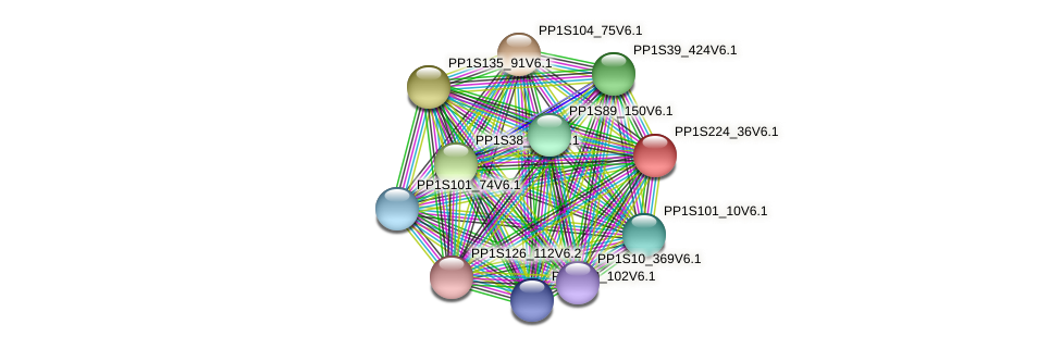 PP1S224_36V6.1 protein (Physcomitrella patens) - STRING interaction network