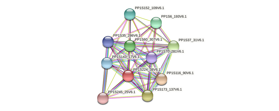 PP1S224_38V6.1 protein (Physcomitrella patens) - STRING interaction network