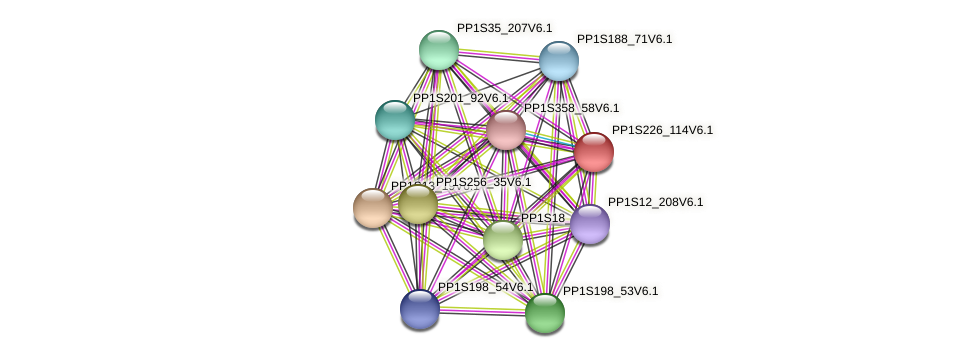 PP1S226_114V6.1 protein (Physcomitrella patens) - STRING interaction network
