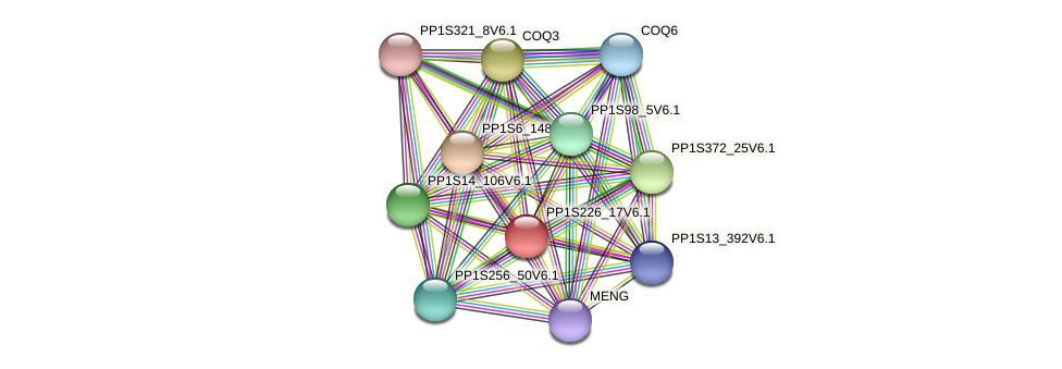 PP1S226_17V6.1 protein (Physcomitrella patens) - STRING interaction network