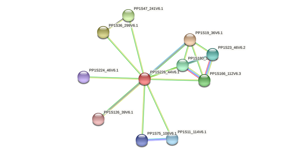 PP1S226_44V6.1 protein (Physcomitrella patens) - STRING interaction network