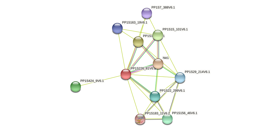 PP1S226_81V6.1 protein (Physcomitrella patens) - STRING interaction network