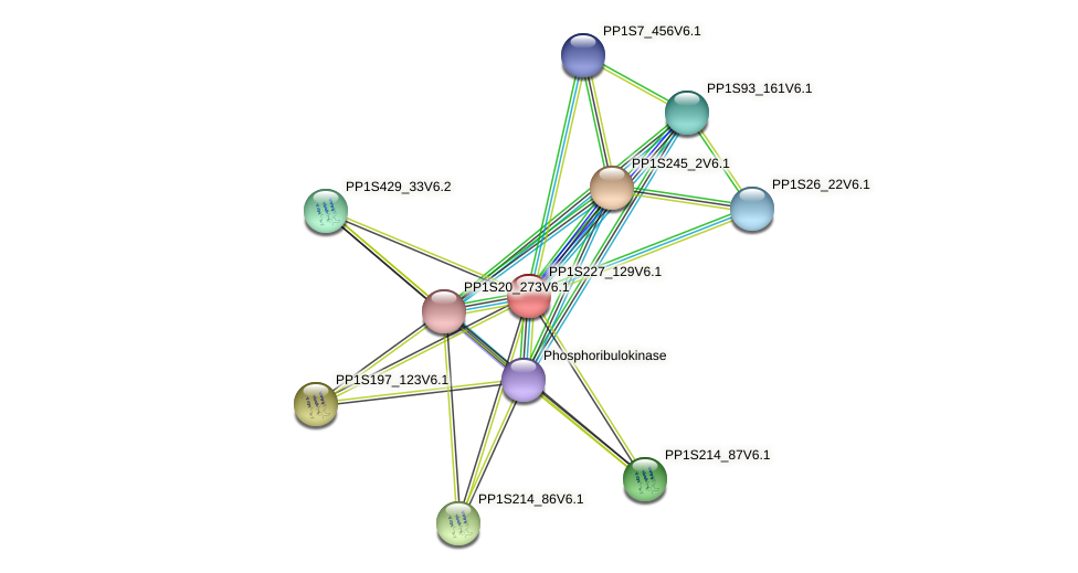 PP1S227_129V6.1 protein (Physcomitrella patens) - STRING interaction network