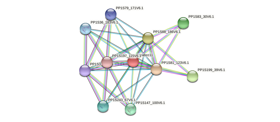 ppabcc11 protein (Physcomitrella patens) - STRING interaction network