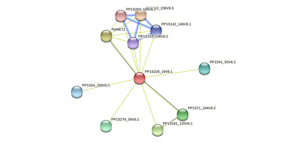 PP1S228_19V6.1 protein (Physcomitrella patens) - STRING interaction network