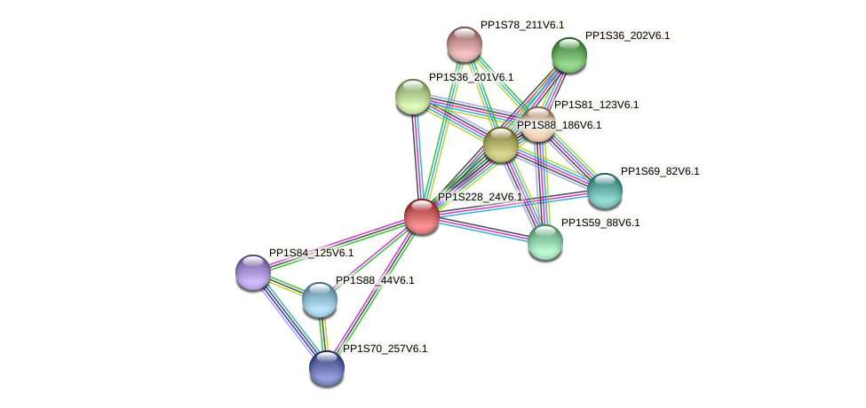 PP1S228_24V6.1 protein (Physcomitrella patens) - STRING interaction network