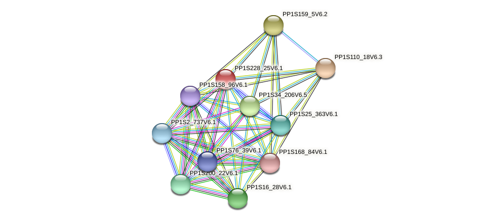 PP1S228_25V6.1 protein (Physcomitrella patens) - STRING interaction network