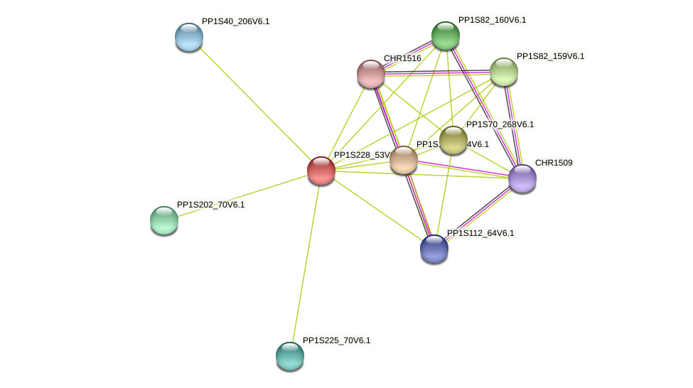PP1S228_53V6.1 protein (Physcomitrella patens) - STRING interaction network