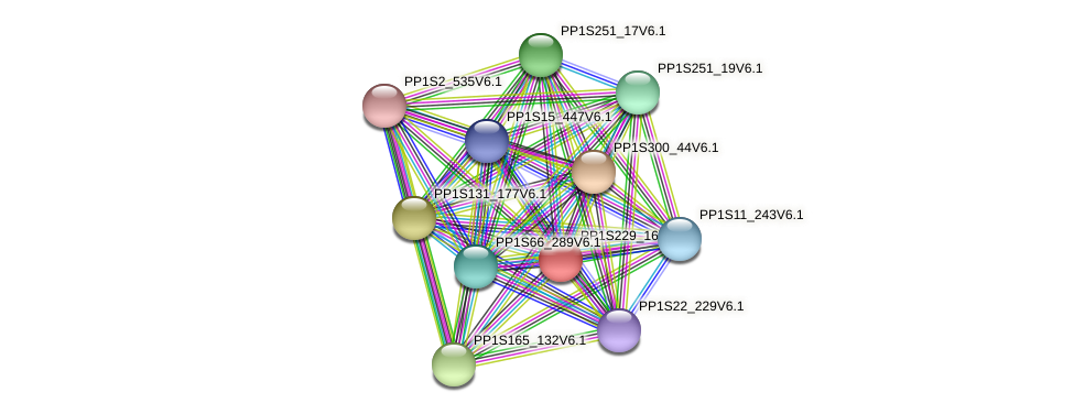 PP1S229_16V6.1 protein (Physcomitrella patens) - STRING interaction network