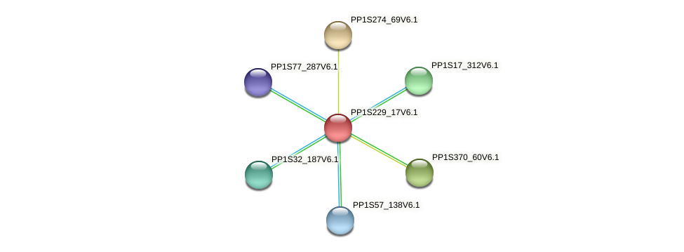 PP1S229_17V6.1 protein (Physcomitrella patens) - STRING interaction network