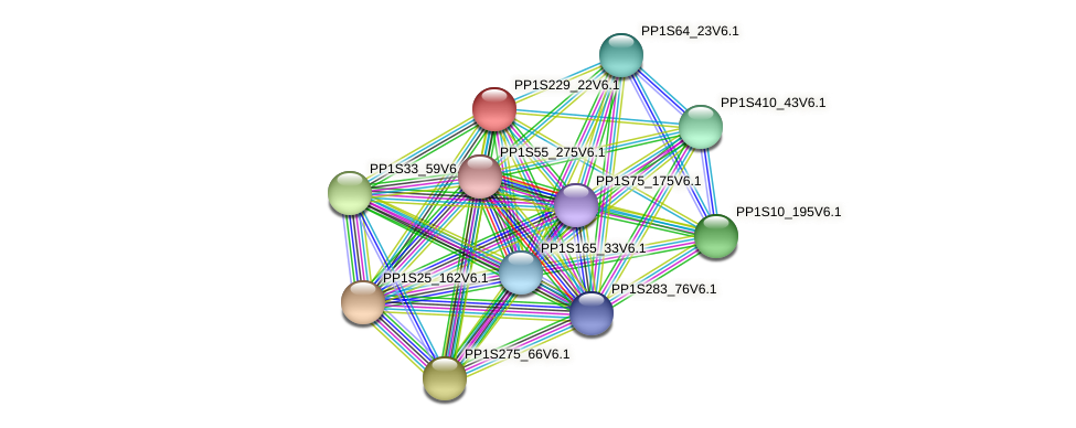 PP1S229_22V6.1 protein (Physcomitrella patens) - STRING interaction network