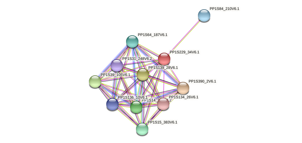 PP1S229_34V6.1 protein (Physcomitrella patens) - STRING interaction network